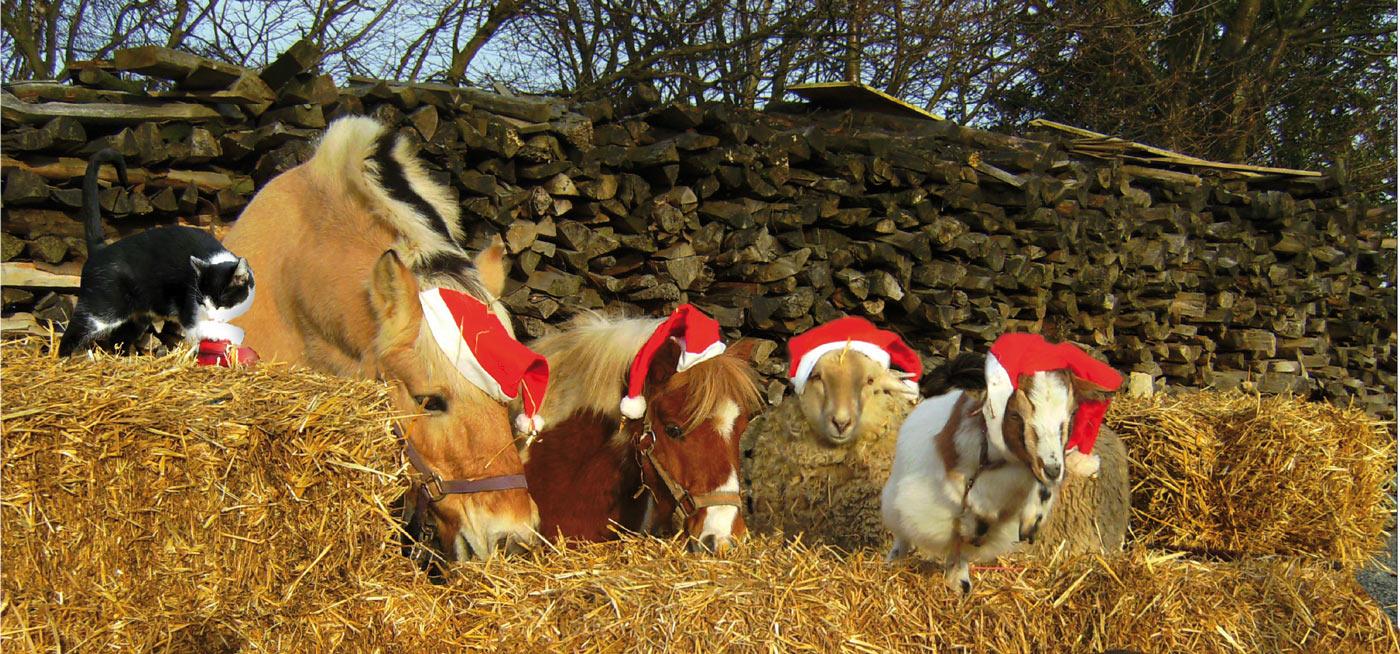 weihnachtsfeier in der eifel